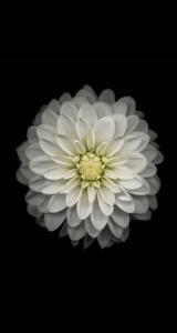 Jason-Zigrino-iOS-8-GM-Wallpapers-12 09-17-2014
