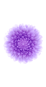 Jason-Zigrino-iOS-8-GM-Wallpapers-13 09-17-2014