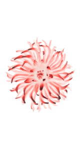 Jason-Zigrino-iOS-8-GM-Wallpapers-14 09-17-2014