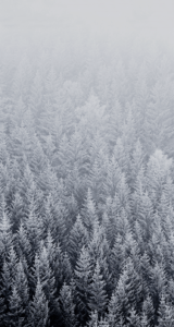Jason-Zigrino-iOS-8-GM-Wallpapers-7 09-17-2014