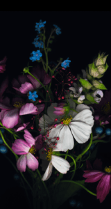 Jason-Zigrino-iOS-8-GM-Wallpapers-8 09-17-2014